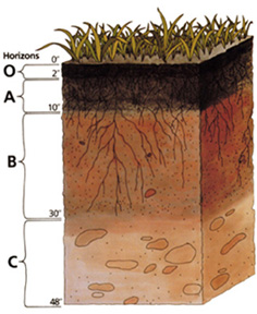 how to tell if the soil has less organic matter